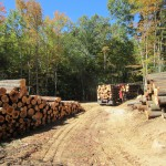 timber management company