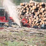 timber harvesting, logging