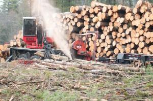 timber harvesting, logging