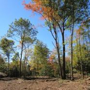 Wildlife Habitat Improvement