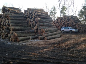 nh logging company