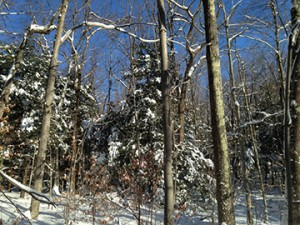 nh forest management